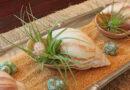 Conchas y corales en la decoración interior